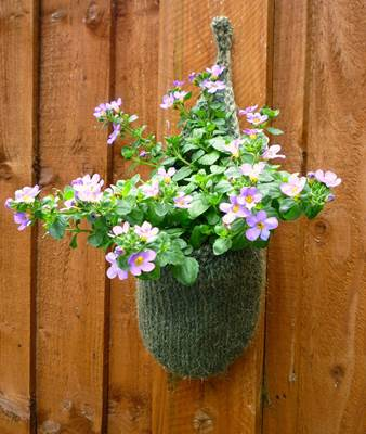 Sutera in a Hand Knitted Hanging Flower Basket