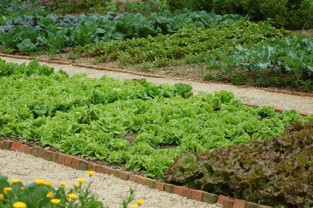 Grow Your Own Kitchen Garden 1