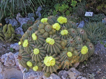 4 Unique Ideas to Add Character to Your Backyard 4 - Cactus Garden