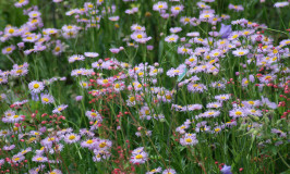 Taming the Problem Areas Of Your Yard with Wildflowers