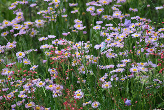 Taming the Problem Areas Of Your Yard with Wildflowers 1