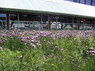 Taming the Problem Areas Of Your Yard with Wildflowers 3