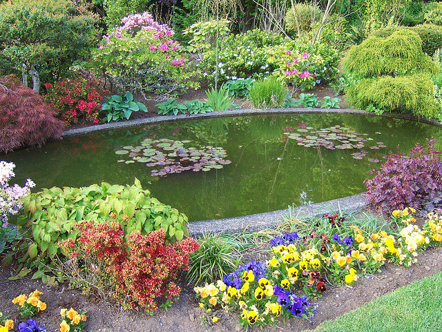Add Colour and Life to Your Garden - Install a Pond 1