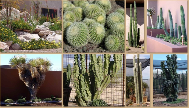 Landscape Design Ideas For The Desert 3