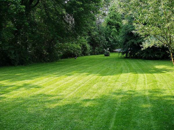 How to Keep Your Lawn Clean and Beautiful in the Summer 2