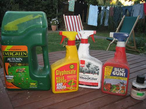 How to Keep Your Lawn Clean and Beautiful in the Summer 3