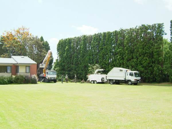 Proper Care For Your Trees Could Actually Increase The Value Of Your Property 1
