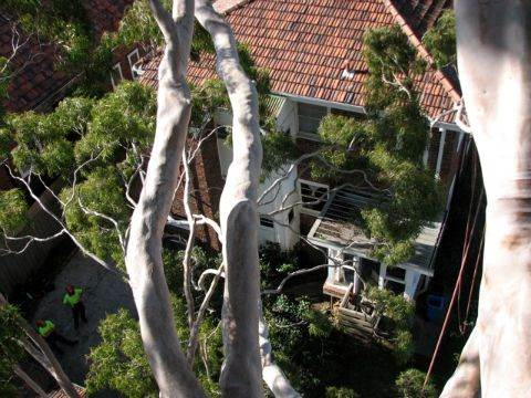 Proper Care For Your Trees Could Actually Increase The Value Of Your Property 3
