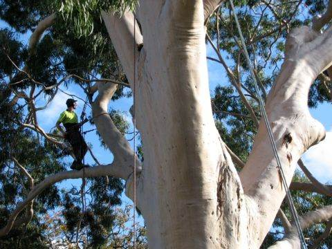 Proper Care For Your Trees Could Actually Increase The Value Of Your Property 4
